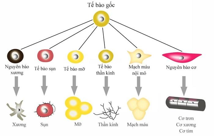 Phương pháp tế bào gốc